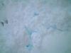 20070107_snow