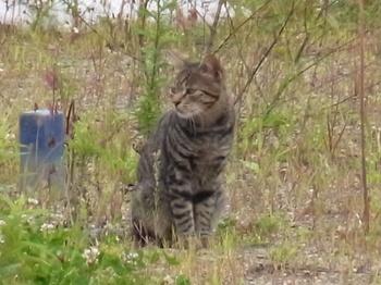 Cat_20100917