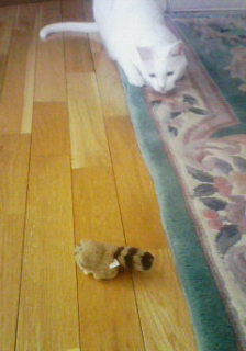 ネコと遊ぶ。