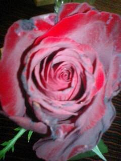Rose_yoshiki_2