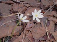 Flower_unknown